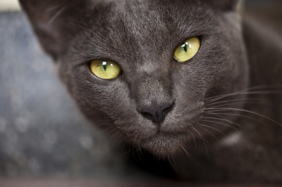 Wealthy Widow Wills Cat $13 Million Estate
